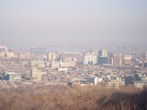 vue mont royal.JPG